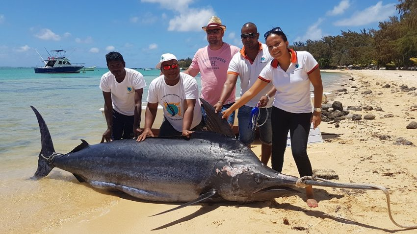 BIG GAME FISHING IN MAURITIUS CLUB'S RECORD CATCH BLUE MARLIN 1060LBS